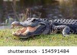 Aggressive Alligator In...