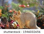 Cute Closeup Of A Fox Squirrel...