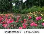 Stock photo many roses in front of a forest at the international rose test garden in washington park in 154609328