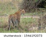 Animal sightings in Akagera National Park, Rwanda. Taken at Magashi camp, Wilderness Safaris. - stock photo