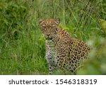 Animals of Akagera National Park, Rwanda.  Wilderness Safaris, Magashi Camp. - stock photo
