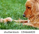 Orange Golden Retriever Dog An...