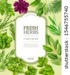 realistic fresh herbs frame... | Shutterstock .eps vector #1546755740