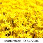 Background Yellow Flower Moss