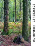 Woodland And Forest Images Fro...