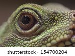 Small photo of Agamic Reptile Eye