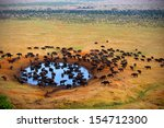 Buffalo At The Source