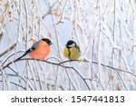 Two Birds Titmouse And...