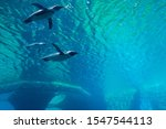 Penguins Underwater In The...