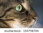 Closeup Of Tabby Cat Face In...
