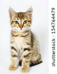 Stock photo british kitten sitting on isolated white background 154764479