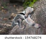 giant anteater  myrmecophaga... | Shutterstock . vector #154768274