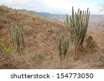 dry forest on the coast in west ...   Shutterstock . vector #154773050