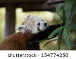 a small panda  firefox  in zoo | Shutterstock . vector #154774250