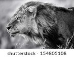 Portrait Of Lion Clawed With...