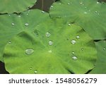 Droplets Of Water On Green...