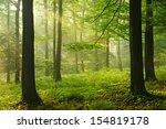 Sunlit Foggy Beech Tree Forest