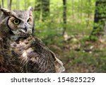Detail Of Great Horned Owl Wit...