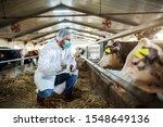 caucasian veterinarian in...   Shutterstock . vector #1548649136