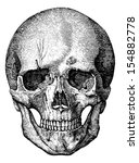 bony skeleton of the face and... | Shutterstock .eps vector #154882778