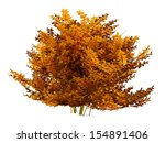 Autumn Bush Isolated