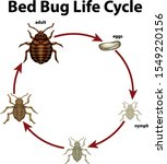 Diagram Showing Life Cycle Of...