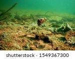underwater freshwater flora ... | Shutterstock . vector #1549367300
