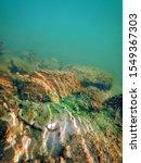 underwater freshwater flora ... | Shutterstock . vector #1549367303