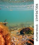 underwater freshwater flora ... | Shutterstock . vector #1549367306