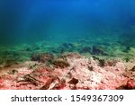 underwater freshwater flora ... | Shutterstock . vector #1549367309