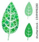 flora leaf composition of... | Shutterstock .eps vector #1549498280