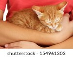 Stock photo sleepy little red kitten in hands close up 154961303