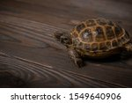 Stock photo central asian tortoise or steppe tortoise crawling on a burnt texture wooden shield 1549640906