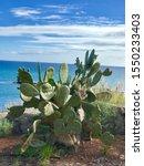Big Green Cactus On A...