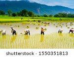 Chau Doc An Giang  Vietnam ...