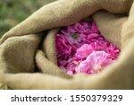 Roses In A Bag In Grasse  France