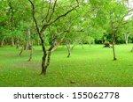 trees garden in thailand | Shutterstock . vector #155062778