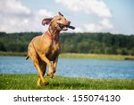 Stock photo dog 155074130