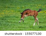Foal Playing In A Meadow