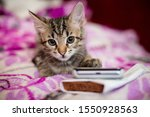 Stock photo the striped kitten lies on a pink blanket the kitten put a paw on the smartphone phone sad kitten 1550928563
