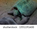 Stock photo two big ploughshare tortoise from above 1551191600