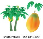 vector papayas  fruit. and... | Shutterstock .eps vector #1551343520