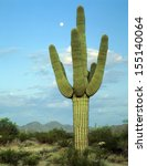 saguaro cactus living on the... | Shutterstock . vector #155140064