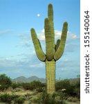 Saguaro Cactus Living On The...