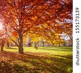 colourful autumn park. some... | Shutterstock . vector #155173139