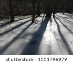 Tree Shadows Cast Along Icey Bog