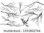 set of silhouettes of branches... | Shutterstock .eps vector #1551802766