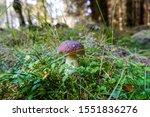 Edible Mushroom Growing In The...