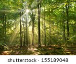beautiful sunbeams in magic... | Shutterstock . vector #155189048