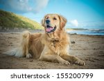 Stock photo dog 155200799